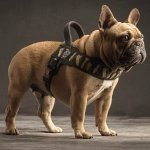 Szelki PRIMO Moro Plus dla dużego psa Tre Ponti