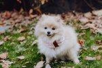 Wełniany komin dla psa JOY - różowy Bowl and Bone
