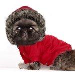bluza czerwona ze świątecznym motywem renifera dla psa od Milk & Pepper
