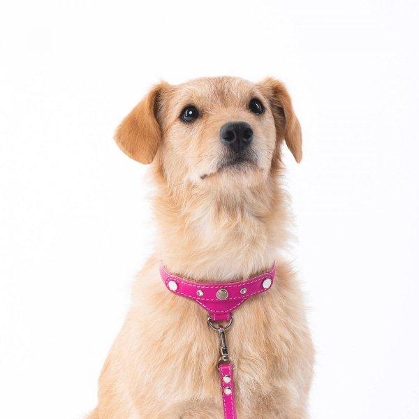 Luksusowa obroża PRESTIGE różowa dla małego psa