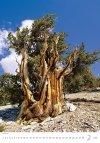 Kalendarz ścienny wieloplanszowy Trees 2021 - luty 2021