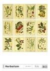 Kalendarz ścienny wieloplanszowy Herbarium 2021 - tylna okładka
