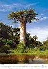 Kalendarz ścienny wieloplanszowy Trees 2021 - czerwiec 2021