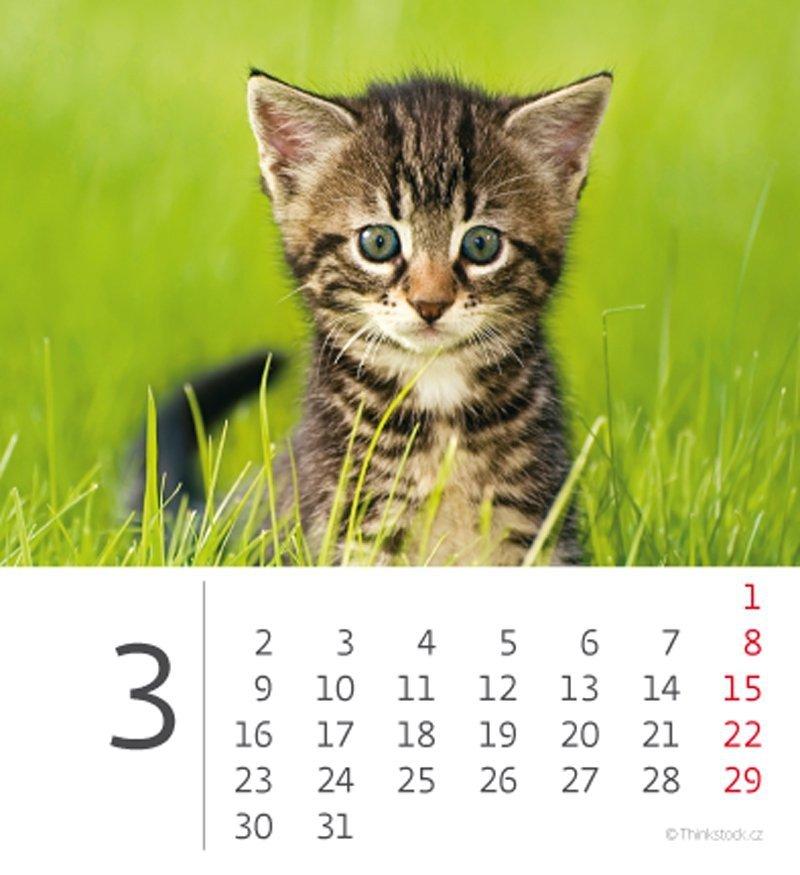 Kalendarz biurkowy 2020 mini Kotki - marzec