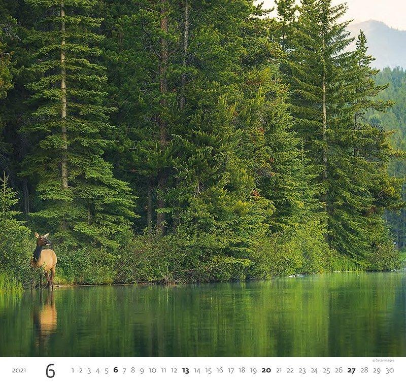 Kalendarz ścienny wieloplanszowy Forest 2021 - czerwiec 2021