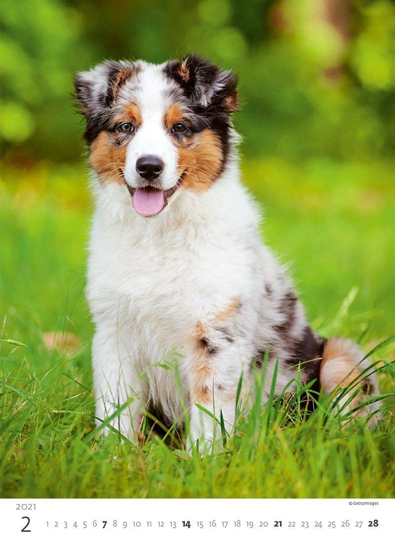 Kalendarz ścienny wieloplanszowy Puppies 2021 - luty 2021