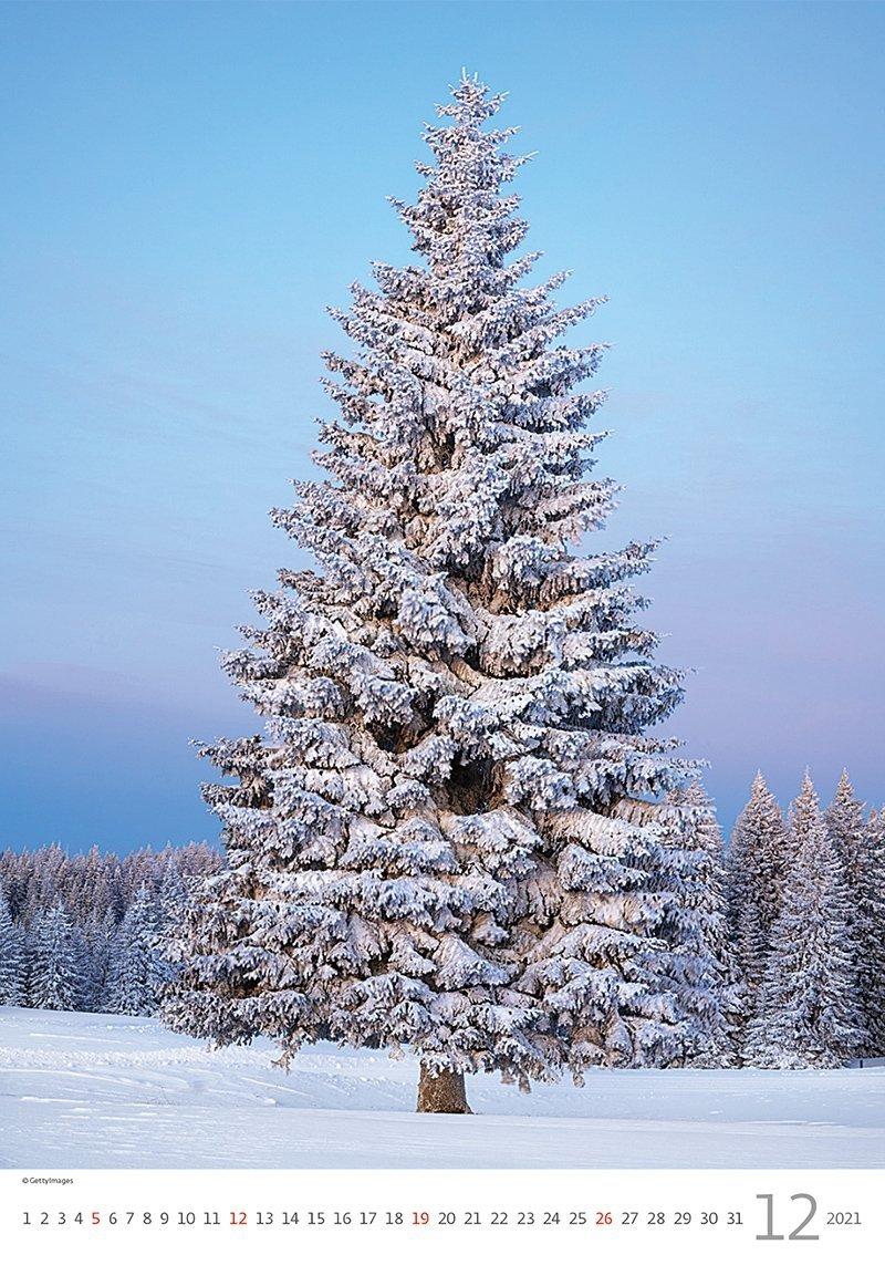 Kalendarz ścienny wieloplanszowy Trees 2021 - grudzień 2021