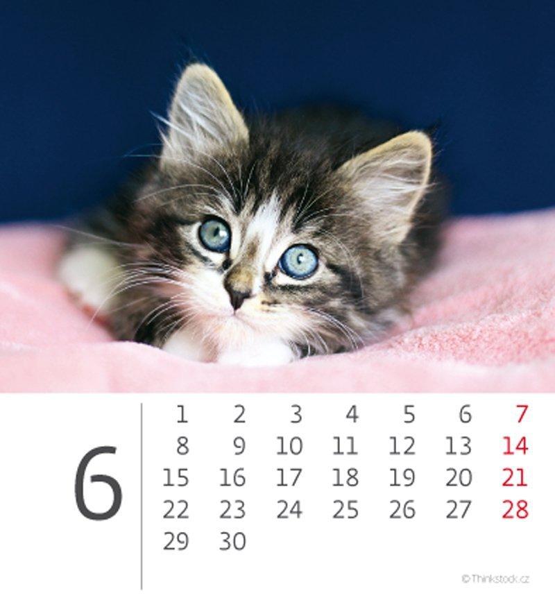 Kalendarz biurkowy 2020 mini Kotki - czerwiec