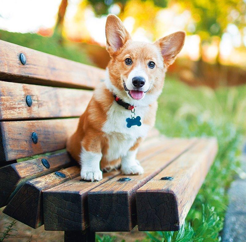 Kalendarz ścienny wieloplanszowy Dogs 2022 z naklejkami - lipiec 2022