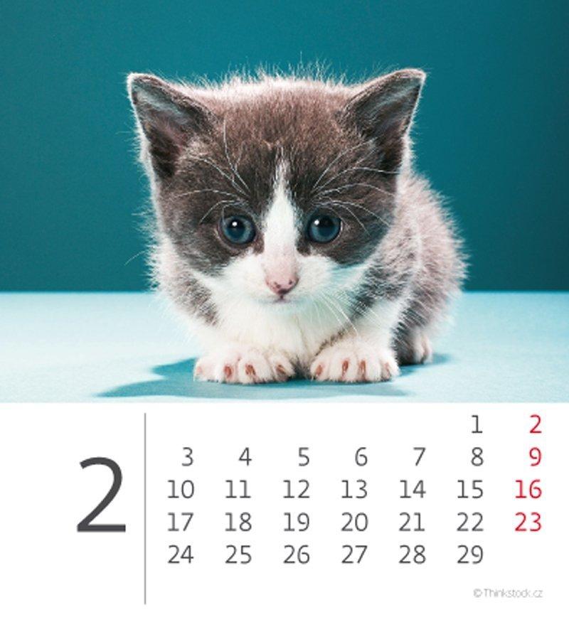 Kalendarz biurkowy 2020 mini Kotki - luty