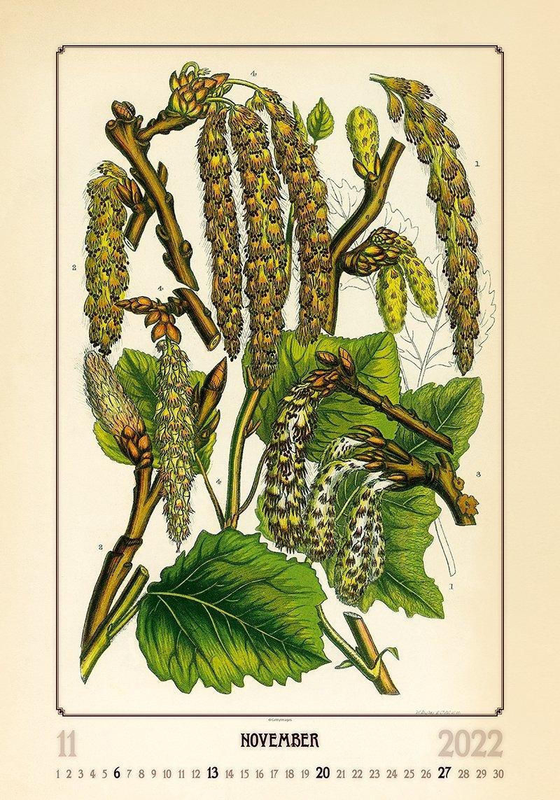 Kalendarz ścienny wieloplanszowy Herbarium 2022 - listopad 2022