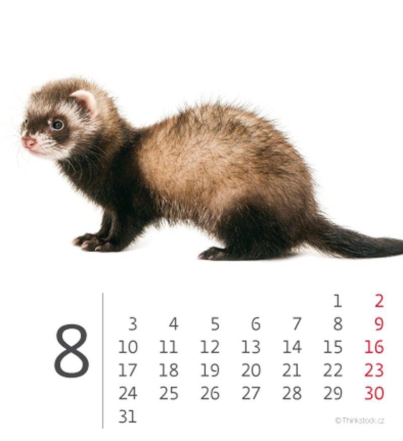 Kalendarz biurkowy mini Zwierzątka 2020 - sierpień