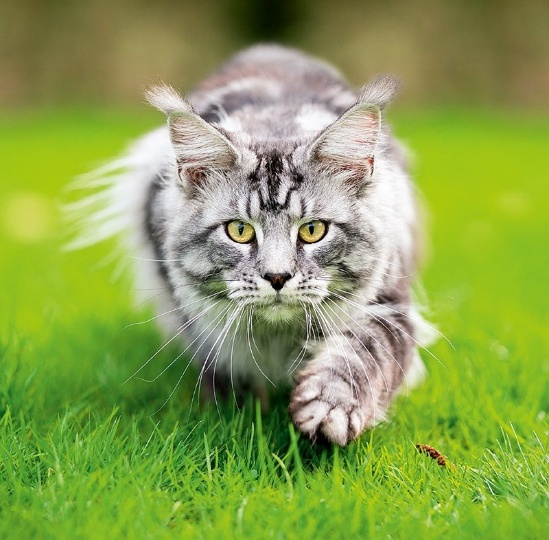 Kalendarz ścienny wieloplanszowy Cats 2022 z naklejkami - maj 2022
