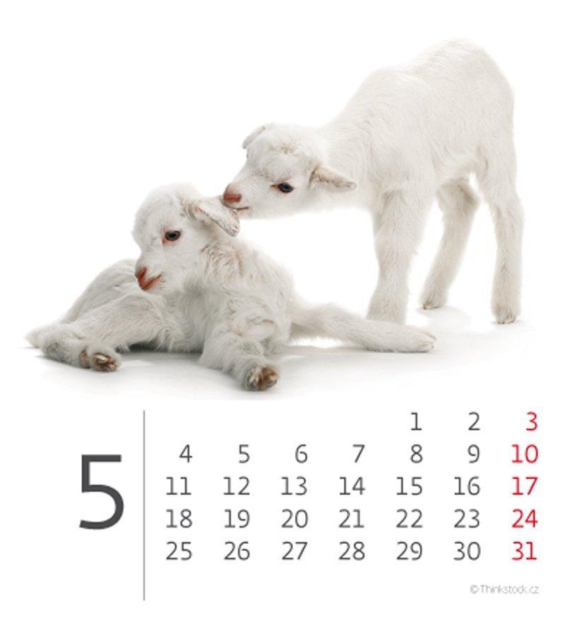 Kalendarz biurkowy mini Zwierzątka 2020 - maj