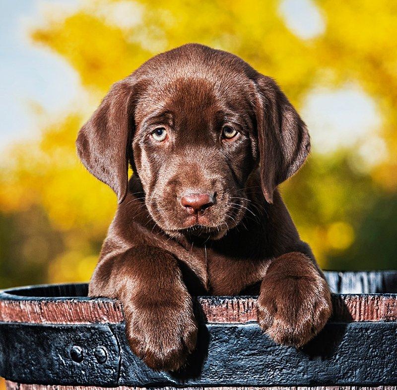 Kalendarz ścienny wieloplanszowy Dogs 2022 z naklejkami - wrzesień 2022