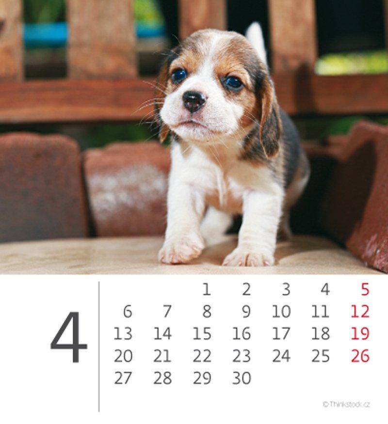 Kalendarz biurkowy mini Pieski 2020 - kwiecień