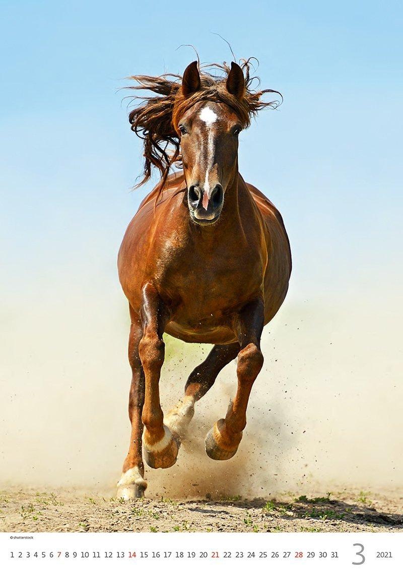 Kalendarz ścienny wieloplanszowy Horses Dreaming 2021 - marzec 2021