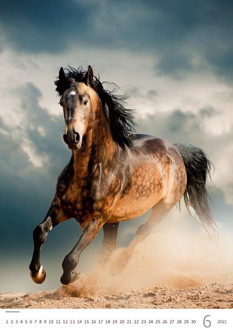 Kalendarz ścienny wieloplanszowy Horses Dreaming 2021 - czerwiec 2021