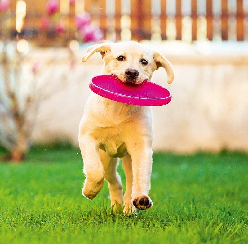 Kalendarz ścienny wieloplanszowy Dogs 2022 z naklejkami - czerwiec 2022