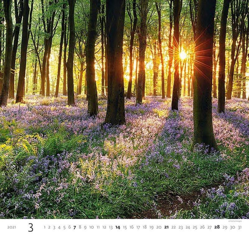 Kalendarz ścienny wieloplanszowy Forest 2021 - marzec 2021