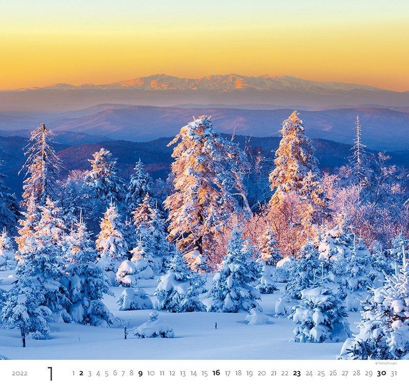 Kalendarz ścienny wieloplanszowy Forest 2022 - styczeń 2022
