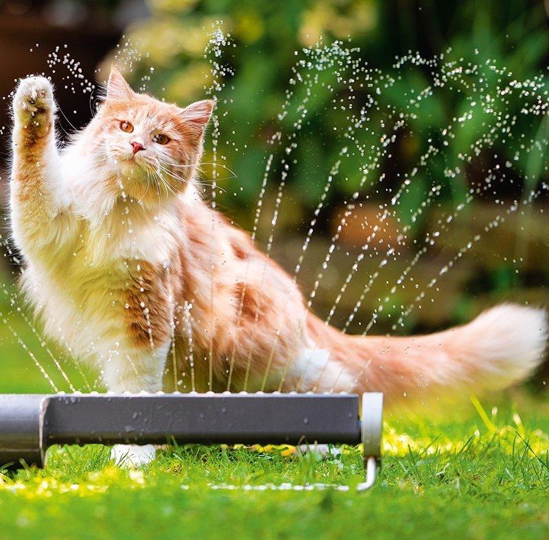 Kalendarz ścienny wieloplanszowy Cats 2022 z naklejkami - sierpień 2022