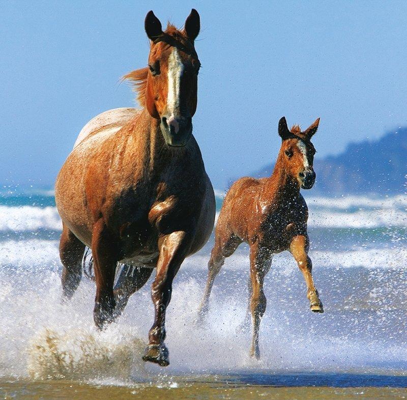 Kalendarz ścienny wieloplanszowy Horses 2022 z naklejkami - czerwiec 2022