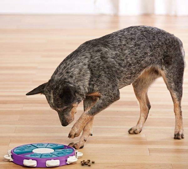 Nina Ottosson Dog Twister - gra edukacyjna dla psów - poziom 3