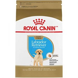 Royal 257620 Labrador Retriever Puppy 3kg