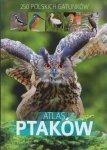 Atlas ptaków 250 polskich gatunków Dominik Marchowski