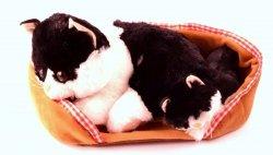 Interaktywny Kotek Mama i Dziecko z Legowiskiem Czarno-Biały
