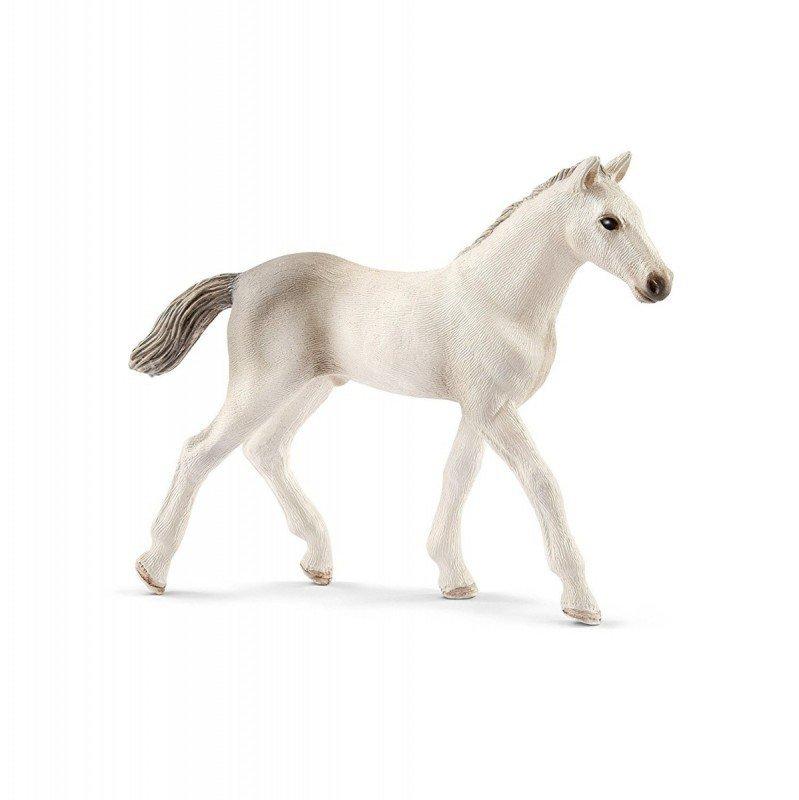 Koń Holsztyński, Źrebię