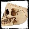 gadżety z czaszkami: popielniczka w kształcie czaszki