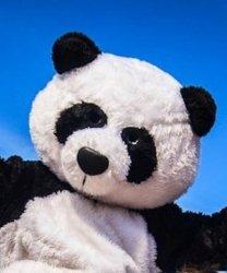 Głowa chodzącej maskotki - Panda
