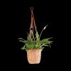Kwietnik wiszący (pełny/naturalny)- sklep z wiklina - zdjęcie