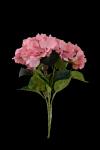 Bukiet hortensja  x 5 kwiatów  MIX - 20TJ086
