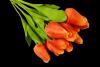 Tulipan x 12 szt. MIX - BXT820/BXT1680