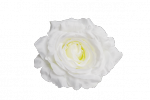 Róża wyrobowa