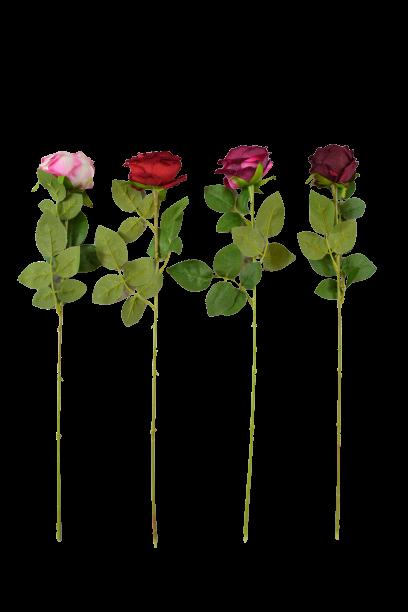 Róża VELVET DE LUX MIX