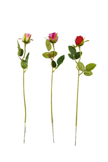 Róża drobna MIX