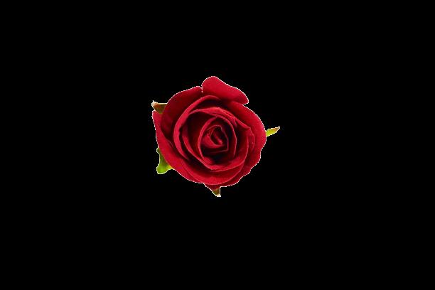 Róża VELVET wyrobowa - 20TJ102H