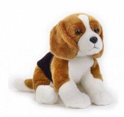Pluszak Pies Beagle National Geographic