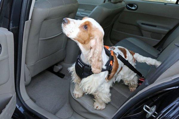 KARDIFF Pasy bezpieczeństwa dla psa, rozm. S CZARNY