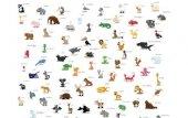 Fototapeta Zwierzęta Alfabet 13369