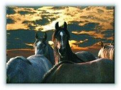 Konie - Obraz na płótnie