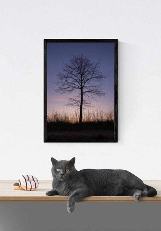 Drzewo o zachodzie - plakat premium