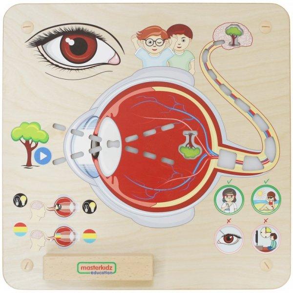 MASTERKIDZ Tablica Edukacyjna Zmysł Wzroku