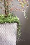 Blumentopf Blumenkübel Ratto Square 400 mocca