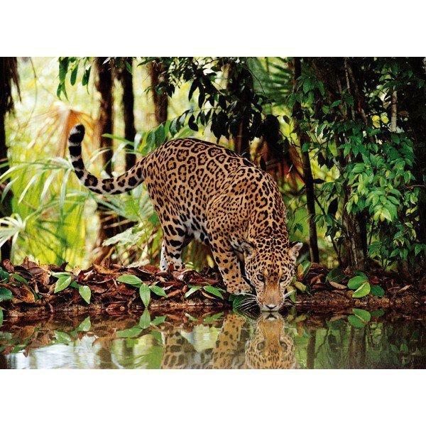 2000 EL. Leopard