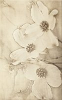 Tuti Beige Inserto Flower 25x40